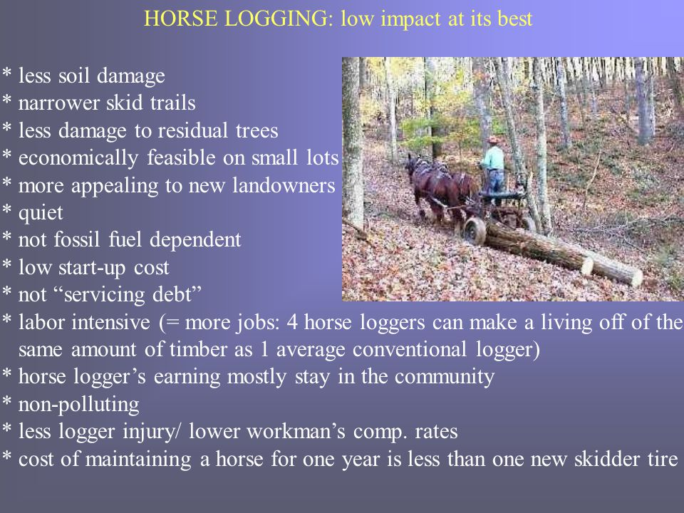 HORSE LOGGING: low impact at its best * less soil damage * narrower skid trails * less damage to residual trees * economically feasible on small lots * more appealing to new landowners * quiet * not fossil fuel dependent * low start-up cost * not servicing debt * labor intensive (= more jobs: 4 horse loggers can make a living off of the same amount of timber as 1 average conventional logger) * horse logger's earning mostly stay in the community * non-polluting * less logger injury/ lower workman's comp.