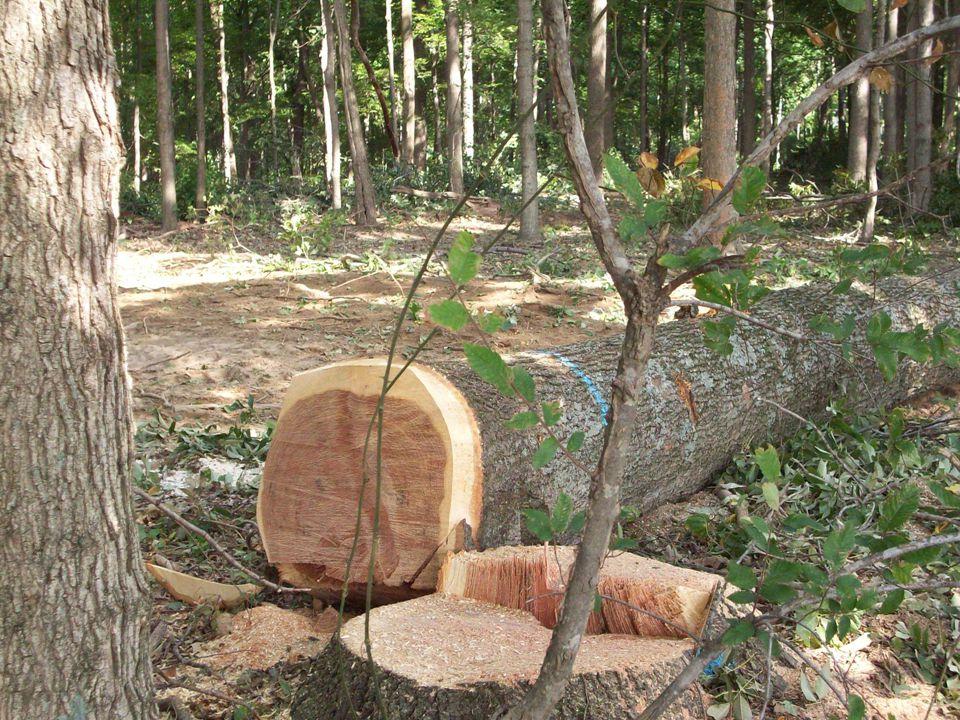 Type of Timber Sales Diameter Limit Cut Diameter Limit Cut Share Sales Share Sales Marked Sealed Bid Sales Marked Sealed Bid Sales