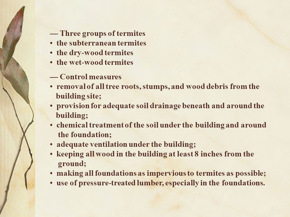 — Three groups of termites the subterranean termites the dry-wood termites the wet-wood termites — Control measures removal of all tree roots, stumps,