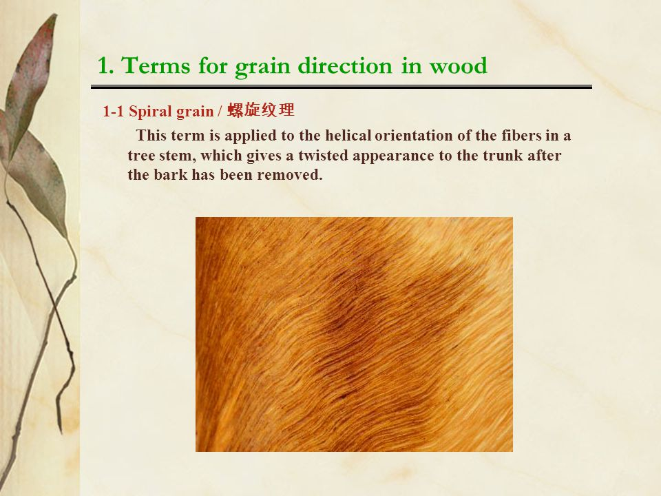 1. Terms for grain direction in wood 1-1 Spiral grain / 螺旋纹理 This term is applied to the helical orientation of the fibers in a tree stem, which gives