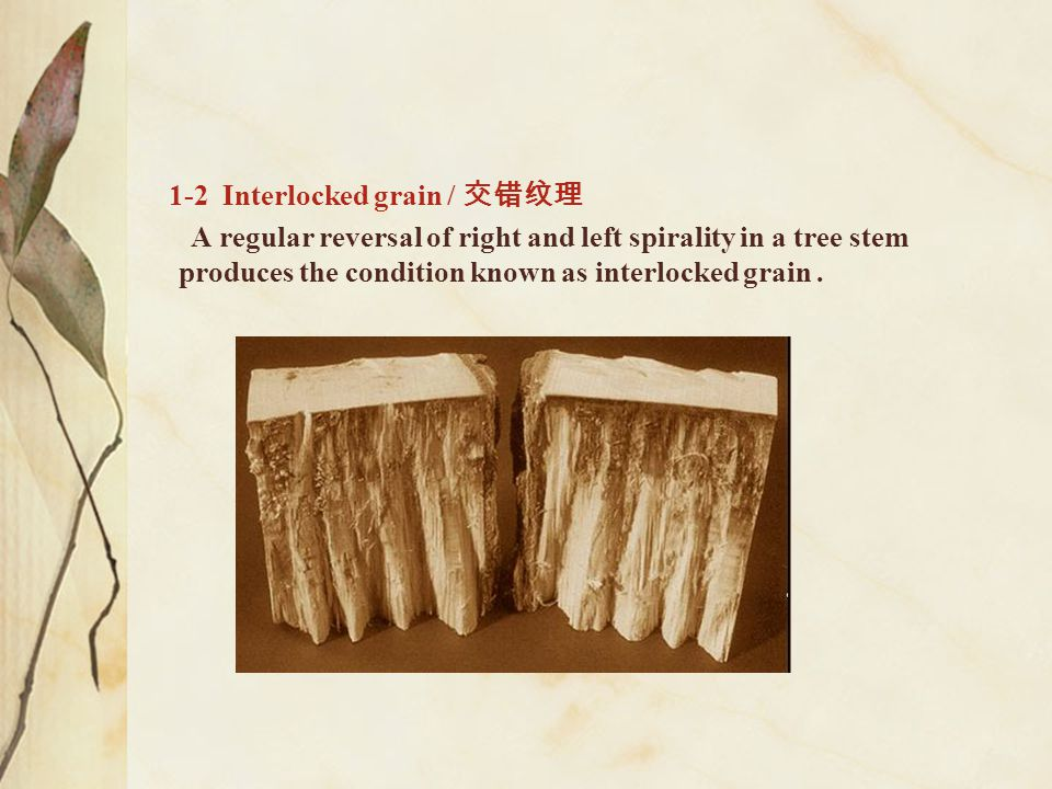 1-2 Interlocked grain / 交错纹理 A regular reversal of right and left spirality in a tree stem produces the condition known as interlocked grain.