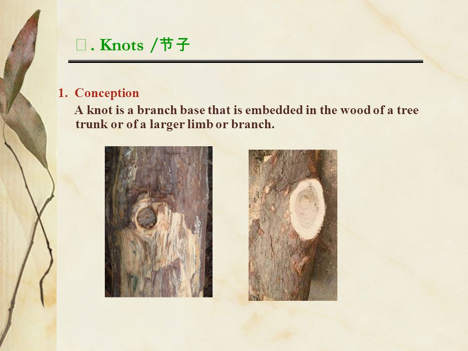 Ⅰ. Knots / 节子 1. Conception A knot is a branch base that is embedded in the wood of a tree trunk or of a larger limb or branch.