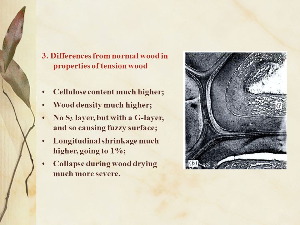 3. Differences from normal wood in properties of tension wood Cellulose content much higher; Wood density much higher; No S 3 layer, but with a G-laye