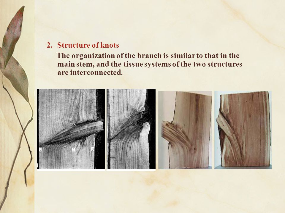 3.All kinds of terms of knots According to the quality of knots — sound knots (健全节) — unsound knots (非健全节) — living knots (活节) — dead knots (死节) — loose knots (松节) — tight knots (紧节) — decayed knots (腐朽节) — lost knots (漏节)
