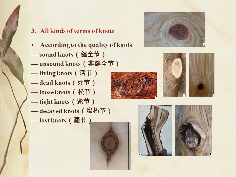 3.All kinds of terms of knots According to the quality of knots — sound knots (健全节) — unsound knots (非健全节) — living knots (活节) — dead knots (死节) — loo