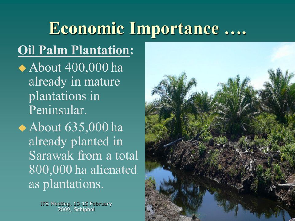 16 Is sustainability achieveable in tropical peatland utilisation.