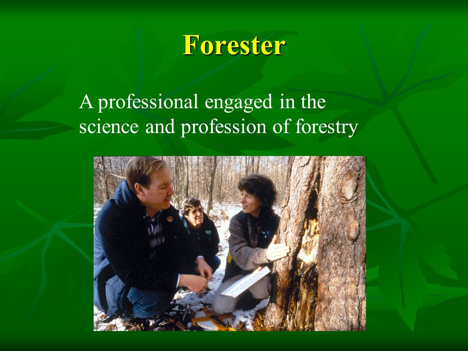 Where to foresters come from.