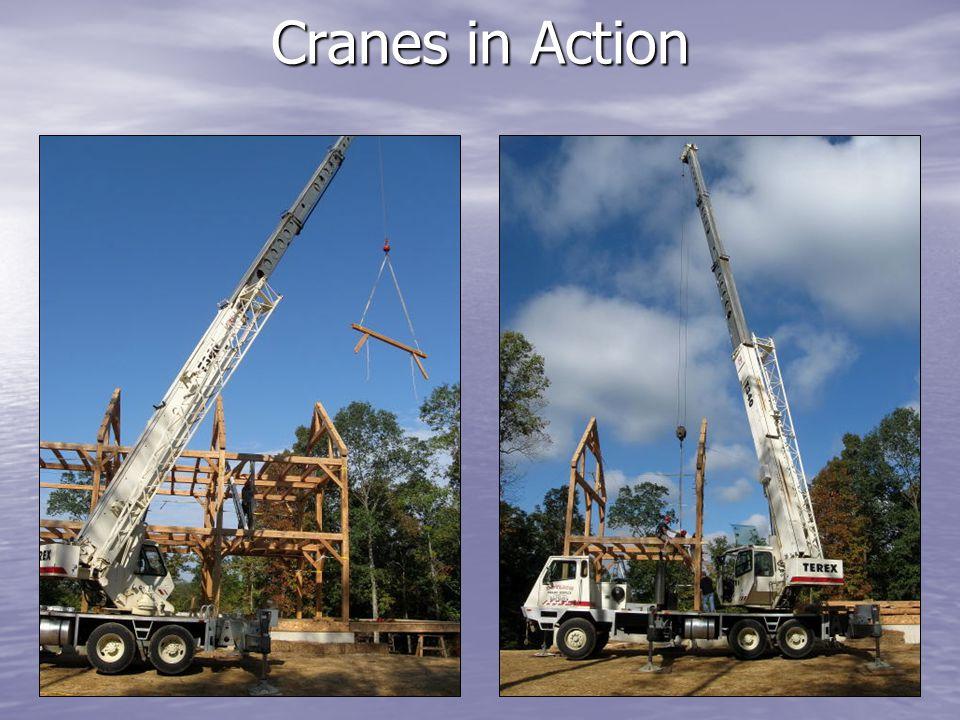 Cranes in Action