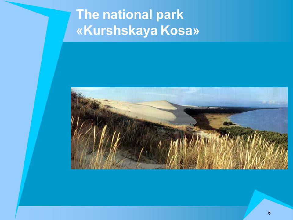 5 The national park «Kurshskaya Kosa»