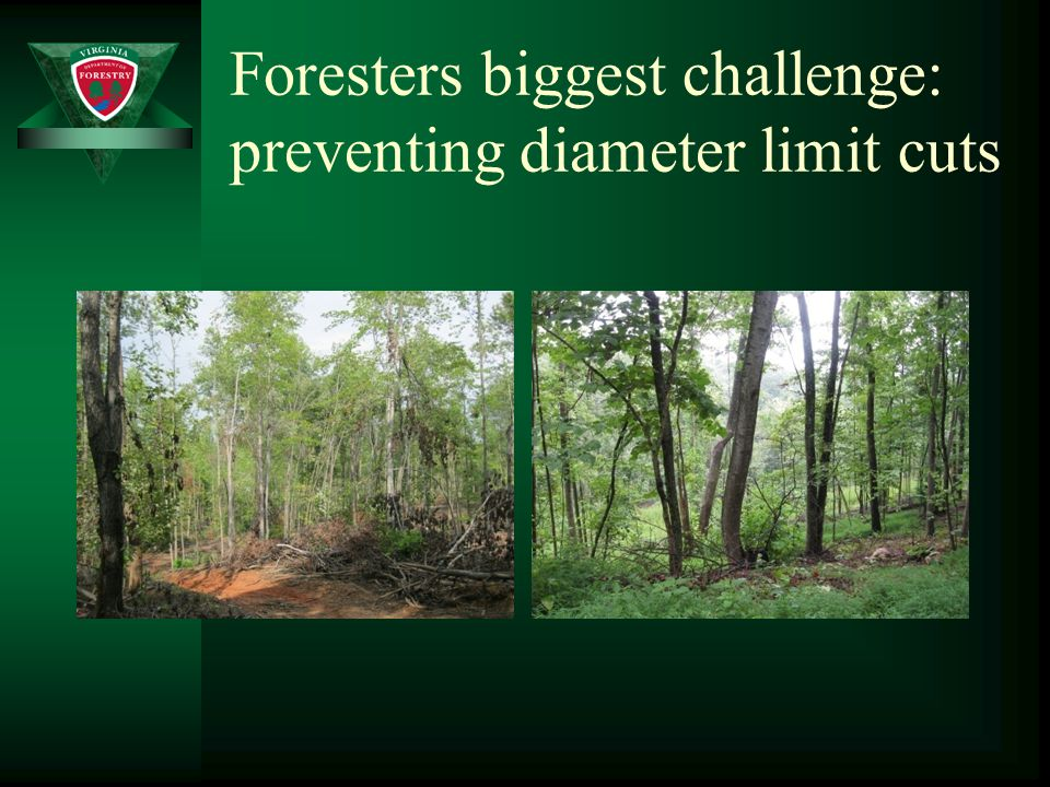 Foresters biggest challenge: preventing diameter limit cuts