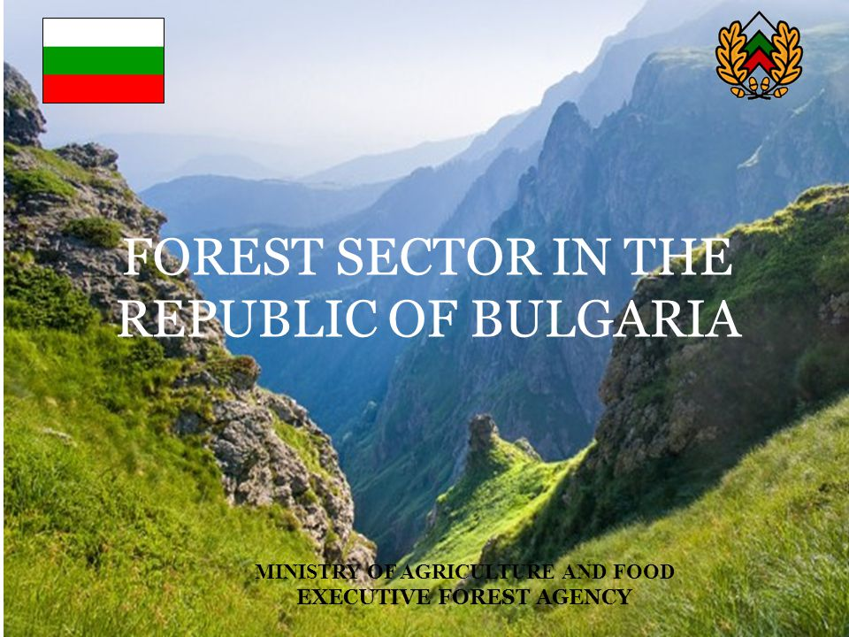 REPUBLIC OF BULGARIA ORGANIZATIONAL STRUCTURE EXECUTIVE FOREST AGENCY MINISTRY OF AGRICULTURE AND FOOD EXECUTIVE FOREST AGENCY 16 Regional Forestry Directorates Specialized Territorial Units Seed Control Stations (2) Forest Protection Stations (3) Experimental Stations (3) Nature Parks Directorates (11) Poplar Station Gora Forestry Magazine National Council on Forests 6 regional State Forest Companies 161 local units – State Forest Enterprises and State Hunting Enterprises