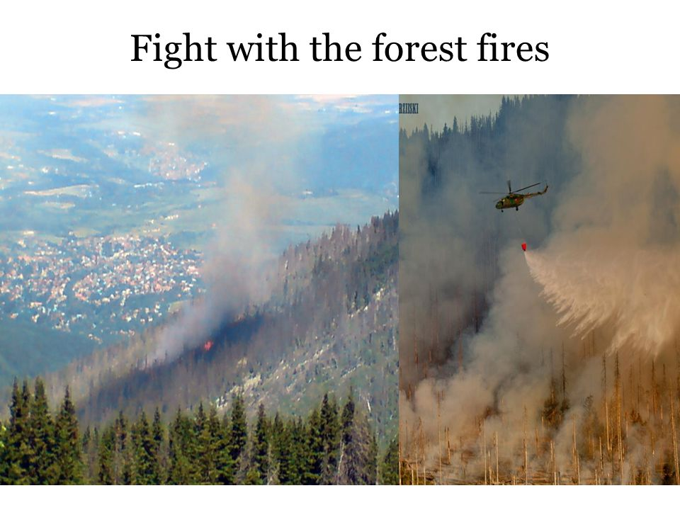 Fight with the forest fires