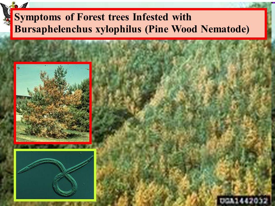 Symptoms of Forest trees Infested with Bursaphelenchus xylophilus (Pine Wood Nematode) 24