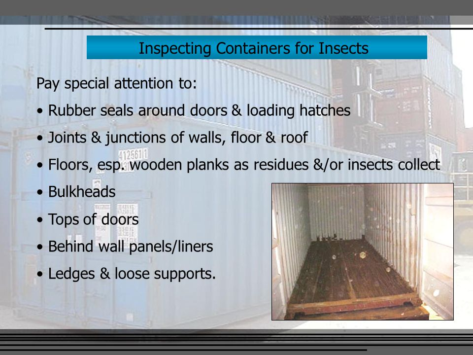 Inspecting Containers for Insects Pay special attention to: Rubber seals around doors & loading hatches Joints & junctions of walls, floor & roof Floors, esp.