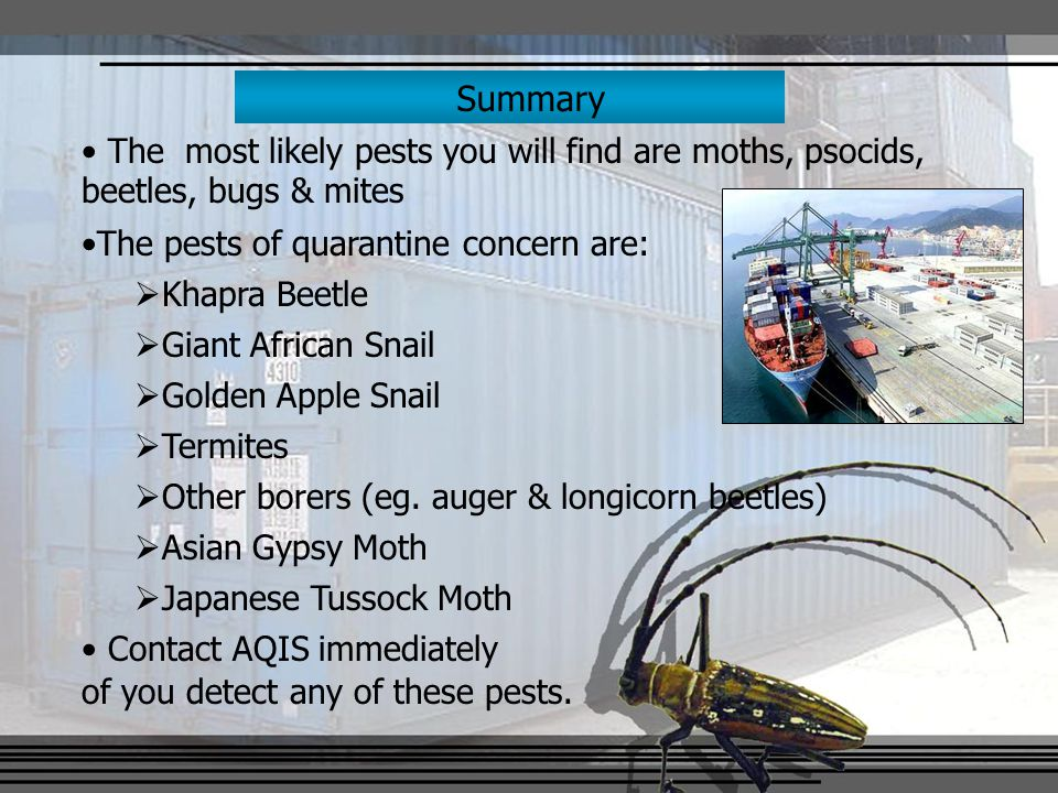 Summary The most likely pests you will find are moths, psocids, beetles, bugs & mites The pests of quarantine concern are:  Khapra Beetle  Giant African Snail  Golden Apple Snail  Termites  Other borers (eg.