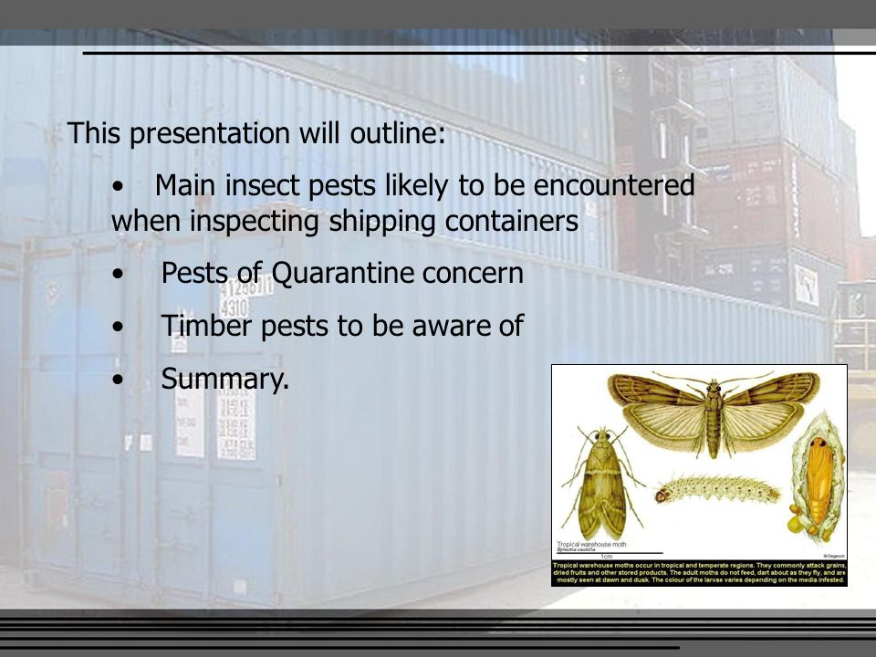 This presentation will outline: Main insect pests likely to be encountered when inspecting shipping containers Pests of Quarantine concern Timber pests to be aware of Summary.