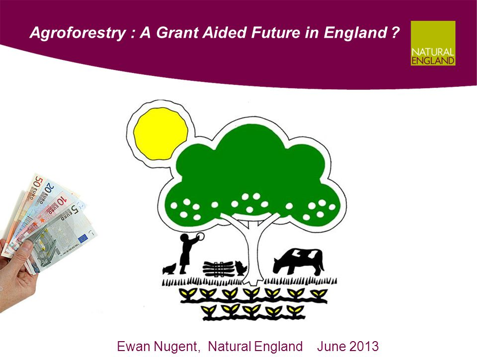 Agroforestry : A Grant Aided Future in England ? Ewan Nugent, Natural England June 2013