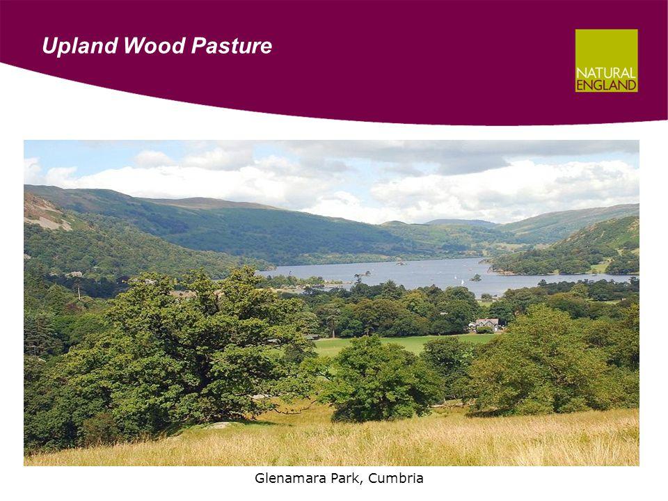 Upland Wood Pasture Glenamara Park, Cumbria