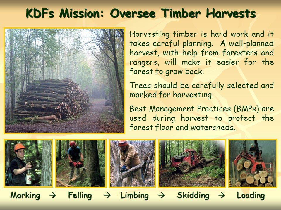 KDFs Mission:Oversee Timber Harvests Harvesting timber is hard work and it takes careful planning.