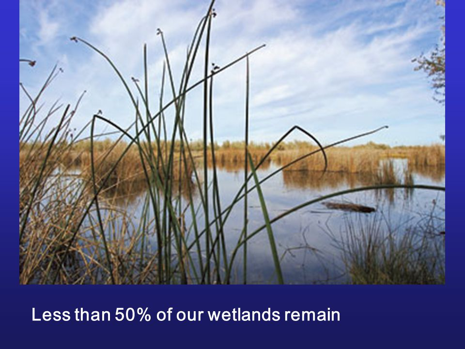 Less than 50% of our wetlands remain