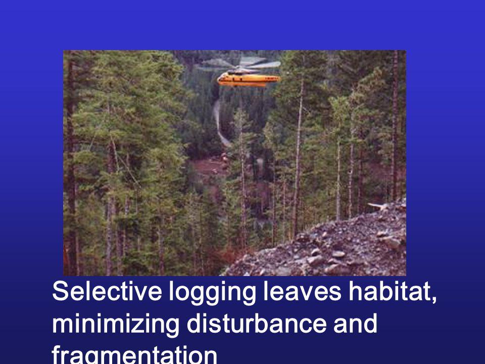 Selective logging leaves habitat, minimizing disturbance and fragmentation