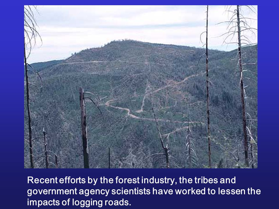 Recent efforts by the forest industry, the tribes and government agency scientists have worked to lessen the impacts of logging roads.