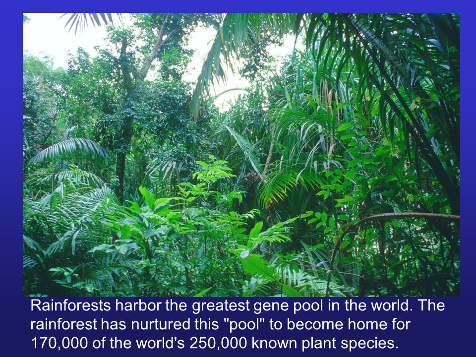Rainforests harbor the greatest gene pool in the world.