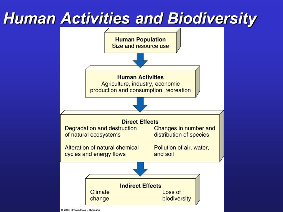 Human Activities and Biodiversity