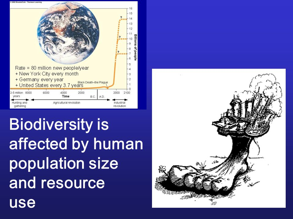 Biodiversity is affected by human population size and resource use