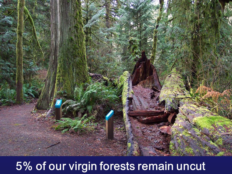 5% of our virgin forests remain uncut