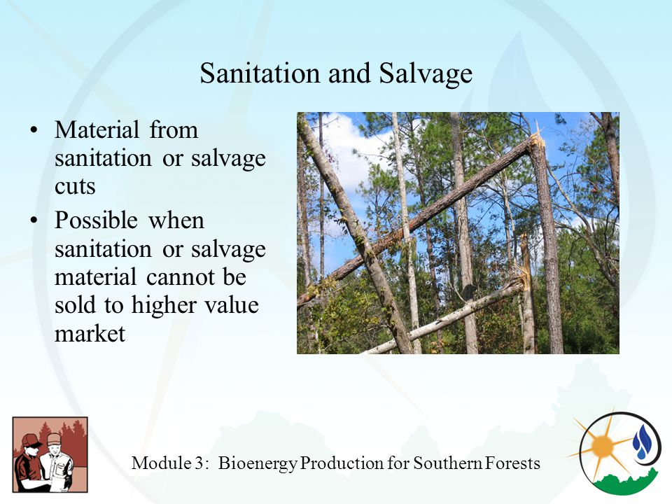 Sanitation and Salvage Material from sanitation or salvage cuts Possible when sanitation or salvage material cannot be sold to higher value market Module 3: Bioenergy Production for Southern Forests