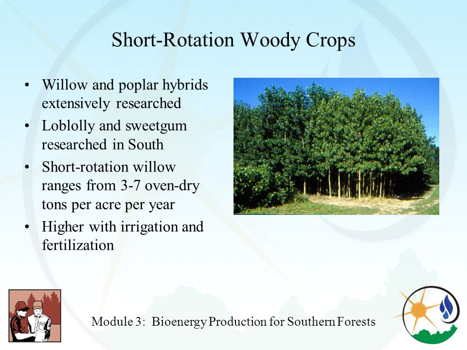 Short-Rotation Woody Crops Willow and poplar hybrids extensively researched Loblolly and sweetgum researched in South Short-rotation willow ranges from 3-7 oven-dry tons per acre per year Higher with irrigation and fertilization Module 3: Bioenergy Production for Southern Forests