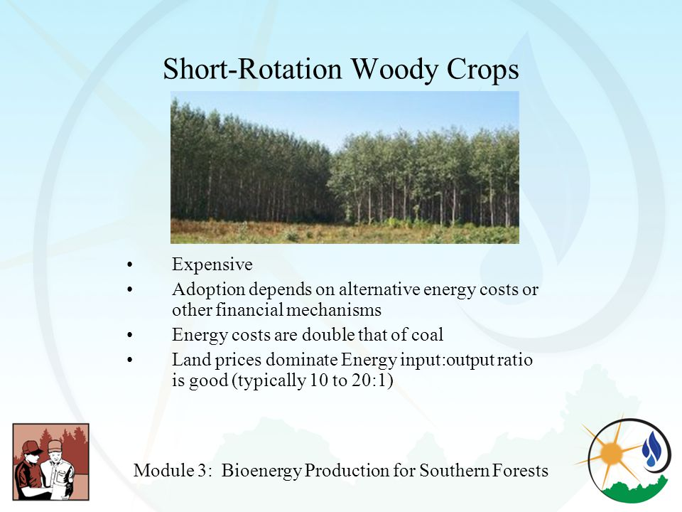 Short-Rotation Woody Crops Expensive Adoption depends on alternative energy costs or other financial mechanisms Energy costs are double that of coal Land prices dominate Energy input:output ratio is good (typically 10 to 20:1) Module 3: Bioenergy Production for Southern Forests