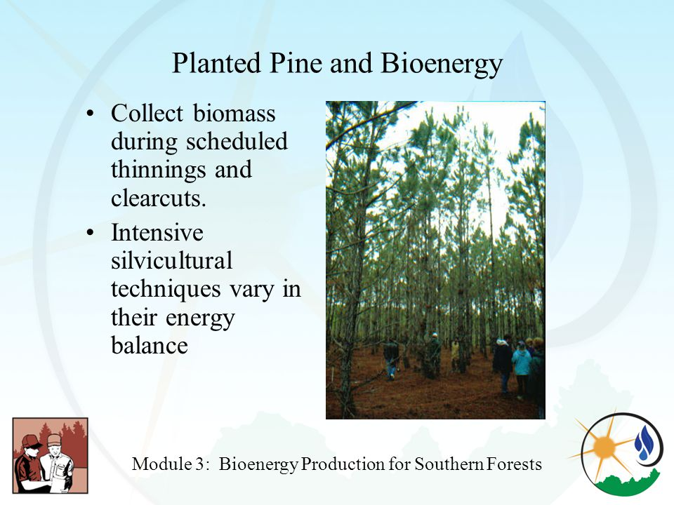 Planted Pine and Bioenergy Collect biomass during scheduled thinnings and clearcuts.