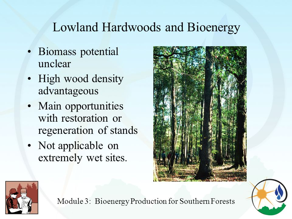 Lowland Hardwoods and Bioenergy Biomass potential unclear High wood density advantageous Main opportunities with restoration or regeneration of stands Not applicable on extremely wet sites.
