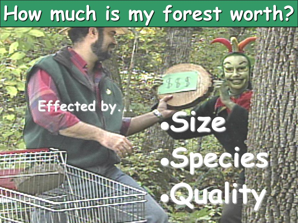 How much is my forest worth? Size Size Species Species Quality Quality Effected by...