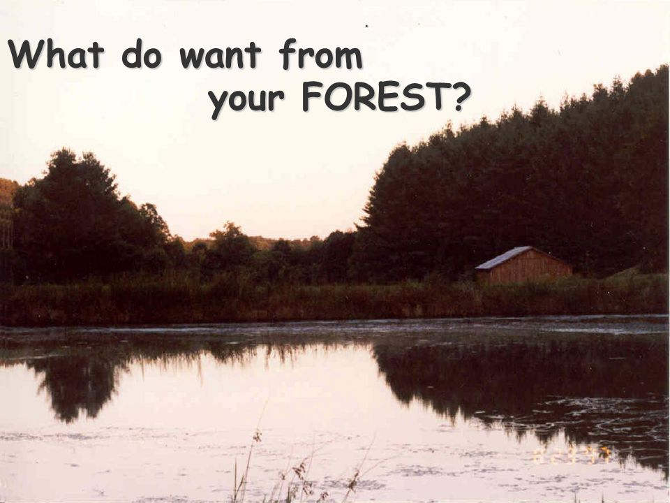 What do want from your FOREST
