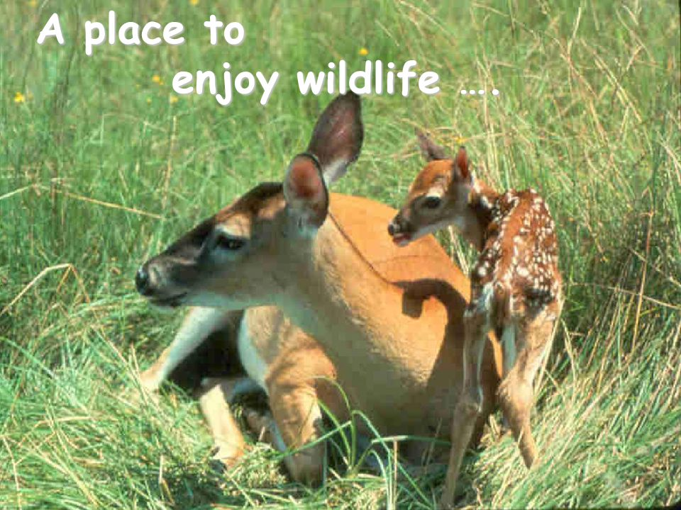 A place to enjoy wildlife ….