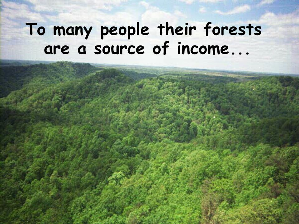 To many people their forests are a source of income...