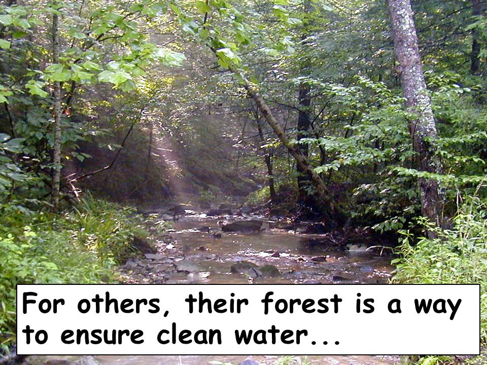 For others, their forest is a way to ensure clean water...