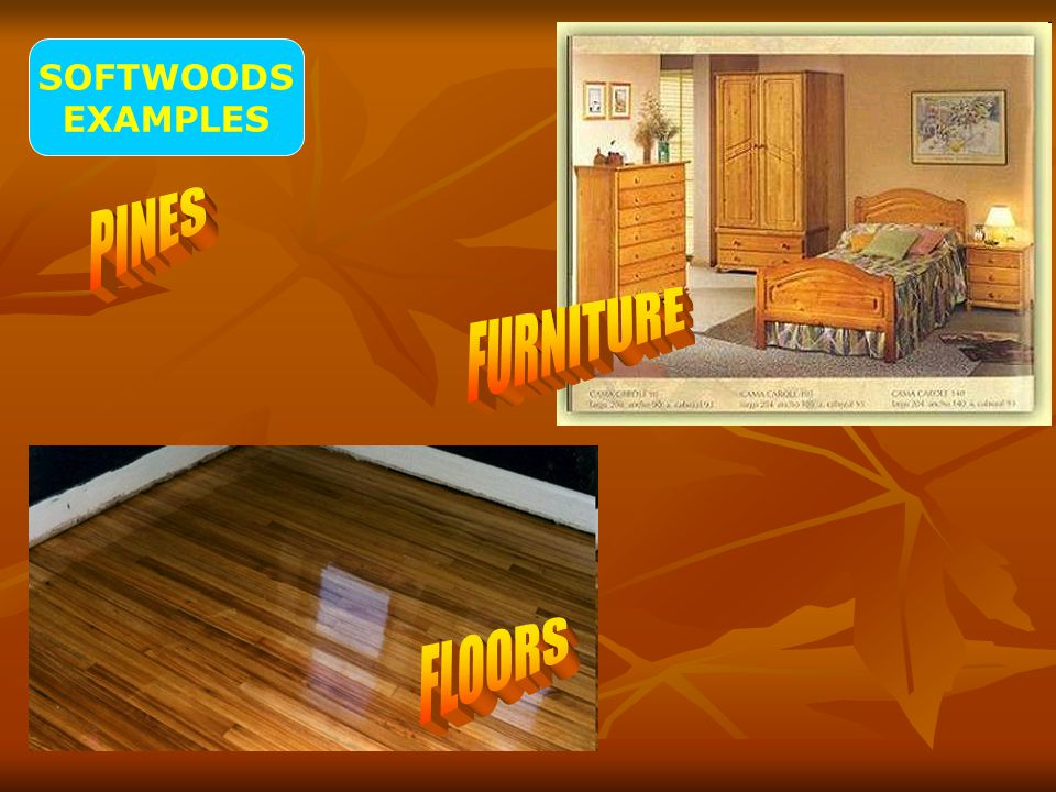 SOFTWOODS EXAMPLES