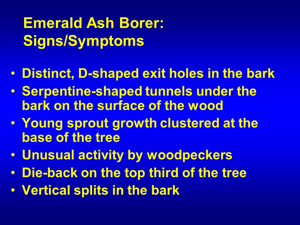 Emerald Ash Borer: Signs/Symptoms Distinct, D-shaped exit holes in the bark Serpentine-shaped tunnels under the bark on the surface of the wood Young sprout growth clustered at the base of the tree Unusual activity by woodpeckers Die-back on the top third of the tree Vertical splits in the bark