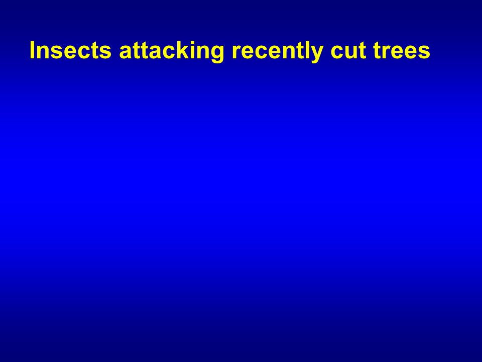 Insects attacking recently cut trees