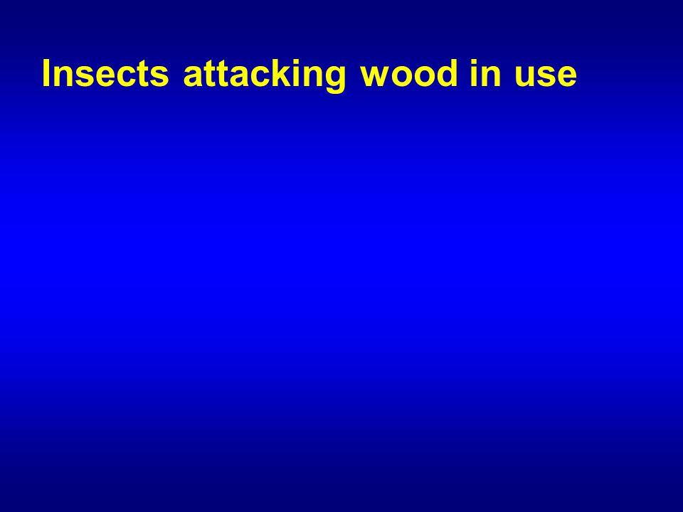 Insects attacking wood in use