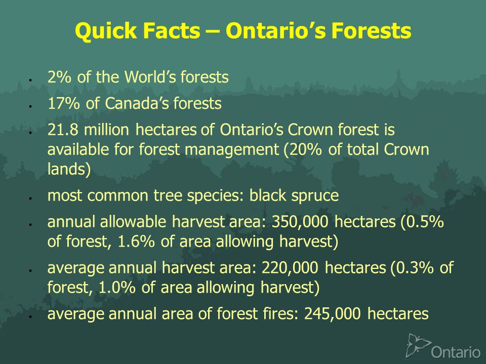 Quick Facts – Ontario's Forests  2% of the World's forests  17% of Canada's forests  21.8 million hectares of Ontario's Crown forest is available for forest management (20% of total Crown lands)  most common tree species: black spruce  annual allowable harvest area: 350,000 hectares (0.5% of forest, 1.6% of area allowing harvest)  average annual harvest area: 220,000 hectares (0.3% of forest, 1.0% of area allowing harvest)  average annual area of forest fires: 245,000 hectares