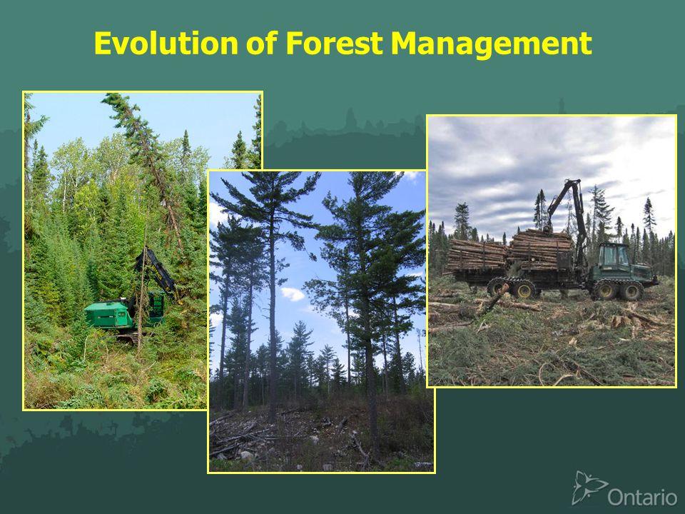 Evolution of Forest Management