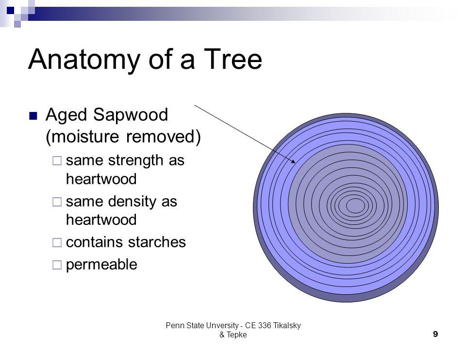 Penn State Unversity - CE 336 Tikalsky & Tepke9 Anatomy of a Tree Aged Sapwood (moisture removed)  same strength as heartwood  same density as heart