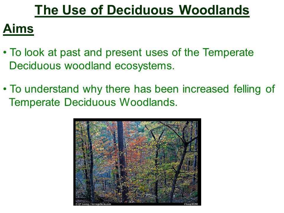The Use of Deciduous Woodlands Aims To look at past and present uses of the Temperate Deciduous woodland ecosystems.