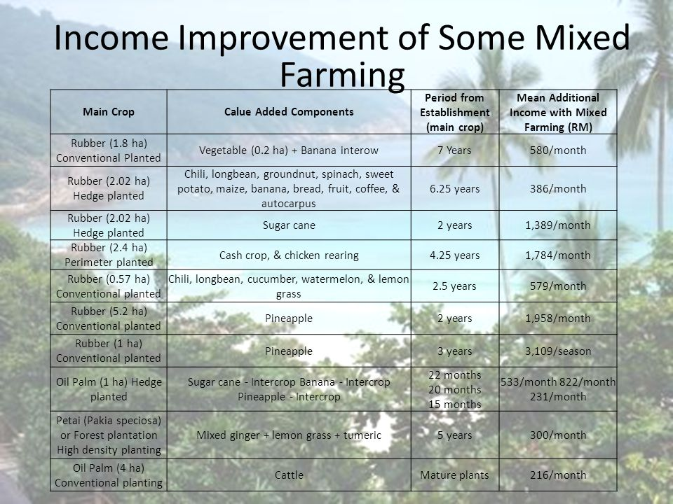 Introduction Income Improvement of Some Mixed Farming Main CropCalue Added Components Period from Establishment (main crop) Mean Additional Income with Mixed Farming (RM) Rubber (1.8 ha) Conventional Planted Vegetable (0.2 ha) + Banana interow7 Years580/month Rubber (2.02 ha) Hedge planted Chili, longbean, groundnut, spinach, sweet potato, maize, banana, bread, fruit, coffee, & autocarpus 6.25 years386/month Rubber (2.02 ha) Hedge planted Sugar cane2 years1,389/month Rubber (2.4 ha) Perimeter planted Cash crop, & chicken rearing4.25 years1,784/month Rubber (0.57 ha) Conventional planted Chili, longbean, cucumber, watermelon, & lemon grass 2.5 years579/month Rubber (5.2 ha) Conventional planted Pineapple2 years1,958/month Rubber (1 ha) Conventional planted Pineapple3 years3,109/season Oil Palm (1 ha) Hedge planted Sugar cane - Intercrop Banana - Intercrop Pineapple - Intercrop 22 months 20 months 15 months 533/month 822/month 231/month Petai (Pakia speciosa) or Forest plantation High density planting Mixed ginger + lemon grass + tumeric5 years300/month Oil Palm (4 ha) Conventional planting CattleMature plants216/month