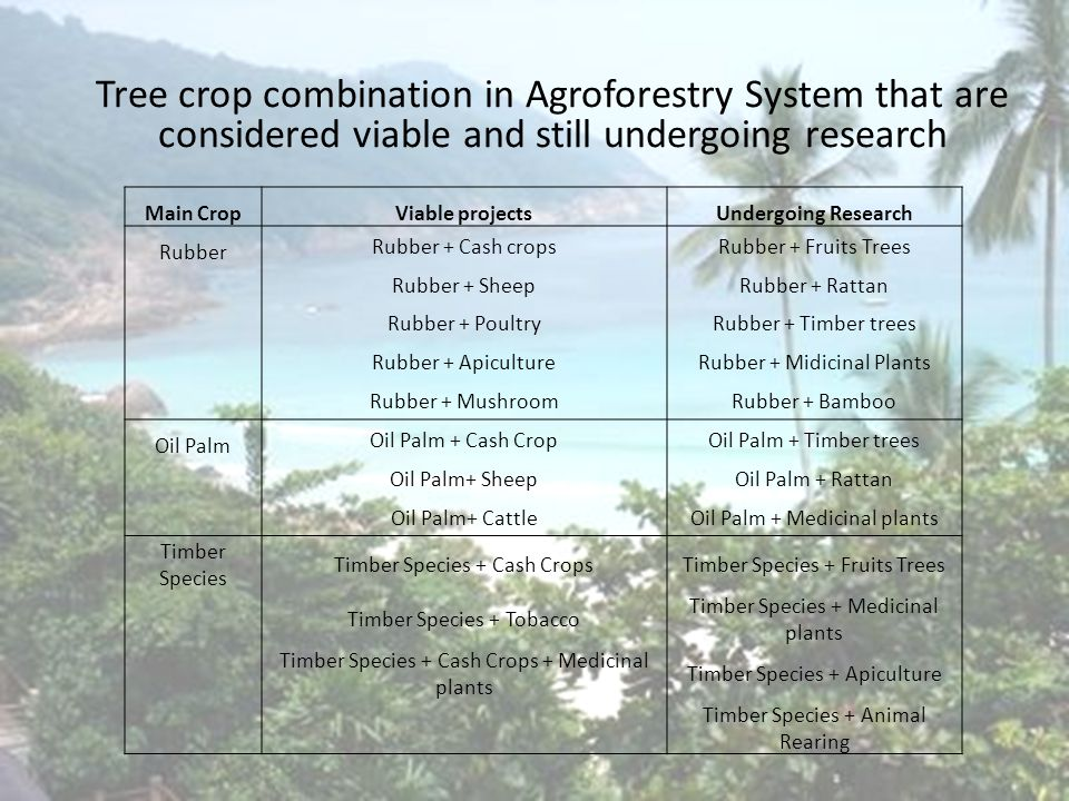 Introduction Tree crop combination in Agroforestry System that are considered viable and still undergoing research Main CropViable projectsUndergoing Research Rubber Rubber + Cash cropsRubber + Fruits Trees Rubber + SheepRubber + Rattan Rubber + PoultryRubber + Timber trees Rubber + ApicultureRubber + Midicinal Plants Rubber + MushroomRubber + Bamboo Oil Palm Oil Palm + Cash CropOil Palm + Timber trees Oil Palm+ SheepOil Palm + Rattan Oil Palm+ CattleOil Palm + Medicinal plants Timber Species Timber Species + Cash CropsTimber Species + Fruits Trees Timber Species + Tobacco Timber Species + Medicinal plants Timber Species + Cash Crops + Medicinal plants Timber Species + Apiculture Timber Species + Animal Rearing
